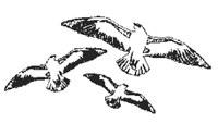 Brieftaubenzuchtverein Odenwaldbote